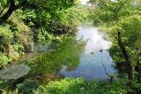 0618_柿田川公園①